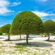 Decorative shaped trees on the beach on Koh Phangan island, Thai - PhotoDune Item for Sale