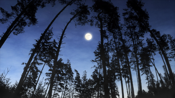 Moonrise Over the Woods