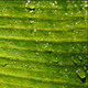 Green Leaf In Nature 11 - VideoHive Item for Sale
