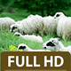 Sheep Standing in the Field 2 - VideoHive Item for Sale