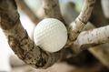 golf - PhotoDune Item for Sale