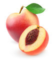 Fresh nectarine peach - PhotoDune Item for Sale