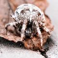 Big Orb spider on the leaf - PhotoDune Item for Sale