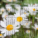 calendar for 2015 year on the white camomiles background - PhotoDune Item for Sale