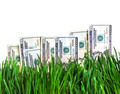 Dollars in the Grass - PhotoDune Item for Sale
