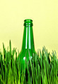 Bottle in the Grass - PhotoDune Item for Sale