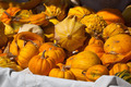 Orange and yellow pumpkins in a market - PhotoDune Item for Sale