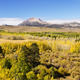 Eastern Sierra Aspen Color - PhotoDune Item for Sale