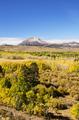 Eastern Sierra Aspen Color - PhotoDune Item for Sale