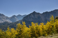 Fall Aspen Color - PhotoDune Item for Sale
