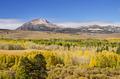 Yellow Fall Aspen Trees - PhotoDune Item for Sale