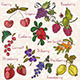 Bright Berries - GraphicRiver Item for Sale