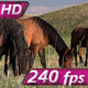 Horse Mare and Foal - VideoHive Item for Sale