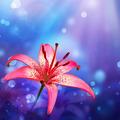 floral background - PhotoDune Item for Sale
