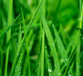 nature background - PhotoDune Item for Sale
