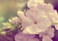 white flowers - PhotoDune Item for Sale