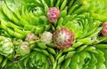 moss macro - PhotoDune Item for Sale