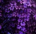 climbing plant - PhotoDune Item for Sale