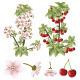 Cherry Blossom and Fruits - GraphicRiver Item for Sale