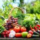 Variety of fresh organic vegetables in the garden - PhotoDune Item for Sale