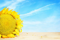 Big yellow sunflower on wooden surface against blue sky - PhotoDune Item for Sale