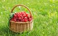 Wicker basket full of raspberry on the lawn - PhotoDune Item for Sale