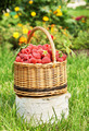 Wicker basket with ripe red raspberry on the birch log - PhotoDune Item for Sale