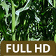 Cornfield 3 - VideoHive Item for Sale