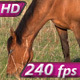 Mare on Spring Pasture - VideoHive Item for Sale