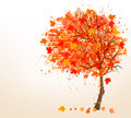 Autumn background with colorful leaves and a tree.  - PhotoDune Item for Sale