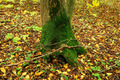 Moss on a tree on a background of bright colorful leaves in autu - PhotoDune Item for Sale