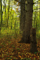 Autumn forest in bright colored leaves. - PhotoDune Item for Sale