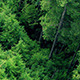 Flying Over Tree Tops - VideoHive Item for Sale
