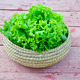 fresh green lettuce in wicker plate - PhotoDune Item for Sale
