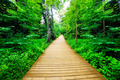 Wooden way in green forest, lush bush. Peaceful nature - PhotoDune Item for Sale