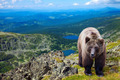 bear in wildness area - PhotoDune Item for Sale