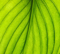 green leaf texture - PhotoDune Item for Sale