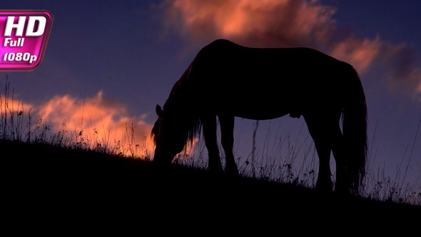 Evening Pasture in the Foothills
