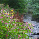 The Creek and Flowers - VideoHive Item for Sale