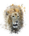 Watercolor Image Of Lion Head - PhotoDune Item for Sale
