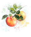 Watercolor Image Of Apples - PhotoDune Item for Sale