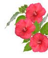 Red Hibiscus Flowers - PhotoDune Item for Sale