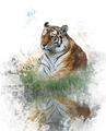 Watercolor Image Of Tiger - PhotoDune Item for Sale