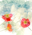 Watercolor Image Of  Poppy Flowers - PhotoDune Item for Sale