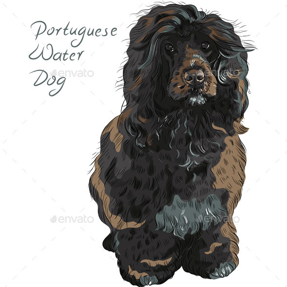 GraphicRiver Portuguese Water Dog 8873079