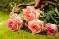 Basket of roses - PhotoDune Item for Sale