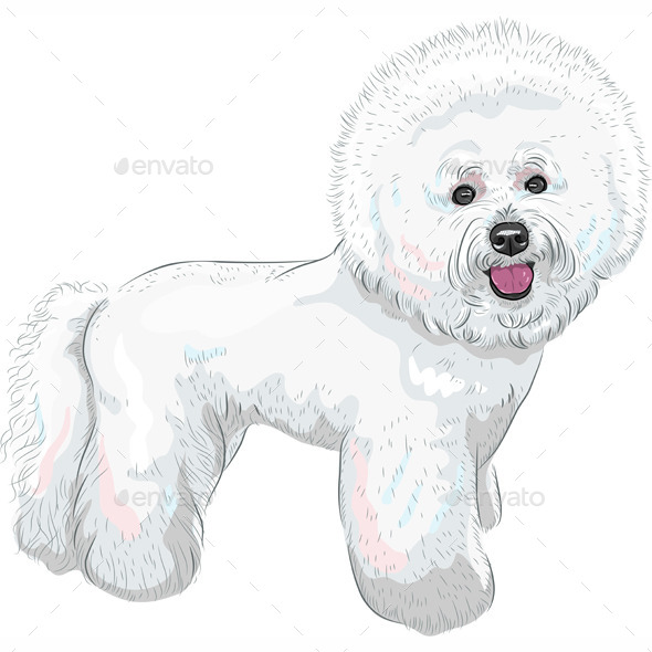 GraphicRiver Bichon Frise Breed Dog 8877223