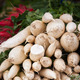 White radishes pile in a market - PhotoDune Item for Sale
