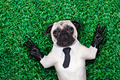 cool pug dog - PhotoDune Item for Sale