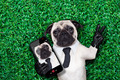 selfie pug dog - PhotoDune Item for Sale
